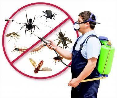 إبادة الحشرات المنزلية نهائيا وكيفية حماية اسرتك